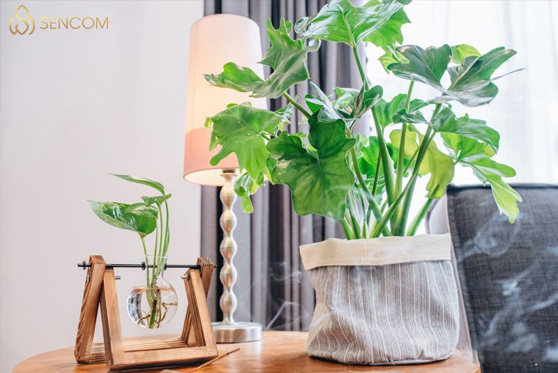 Dù là cả ngôi nhà rộng lớn hãy là một chiếc bàn nhỏ thì khi biết cách sử dụng những món đồ decor để bàn cũng sẽ giúp nó trở nên sinh động, đẹp mắt và tạo...